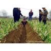 微耕开沟培土机施肥开沟机和果园开沟培土机价格开沟起垄机