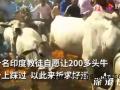 印度教徒趴地上让200多头牛踩 究竟是什么情况?