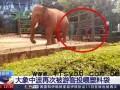 游客投喂大象塑料袋 这已经不是第一次了!!