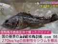 日本禁止福岛黑鲉鱼上市怎么回事?日本为什么禁止福岛黑鲉鱼上市?