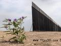 美国国土安全部宣布终止两项美墨边境墙合同